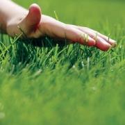 У кого газон зеленее?