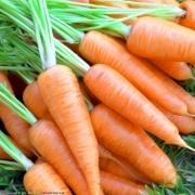 Задержать морковь на грядке