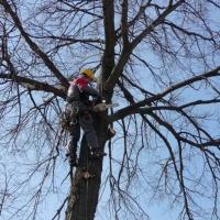 В Омске приводят в порядок деревья у школ и детсадов