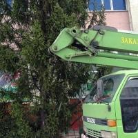 Первую елку в Омске начали устанавливать у «Континента»