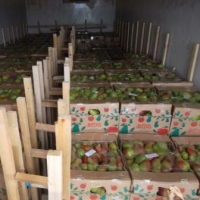 В Омскую область не пустили тонны груш и яблок