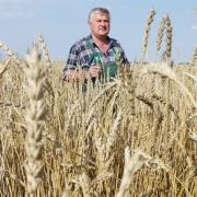 На развитие агропрома Омской области потратят более 40 миллиардов