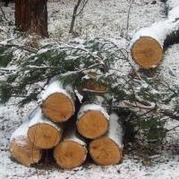 В Тарском районе омичи незаконно нарубили сосен почти на 300 тысяч рублей