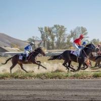 В Омске пройдет турнир по конному спорту