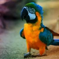 Забывчивые омичи едва не погубили своего попугая