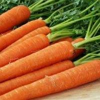 Морковь с яйцами опасных глистов в Омске обнаружил Роспотребнадзор