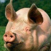 В Омской области объемы производства свинины и сливочного масла выросли на 40 процентов
