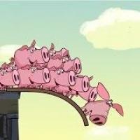 Листовка: не скрывайте случаи заболевания свиней!