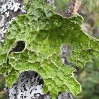 В Омской области обнаружены 17 редких видов растений