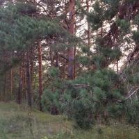 Омские лесничества заранее готовятся к пожароопасному сезону