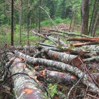 Незаконную вырубку леса в Омской области разглядели только со спутника