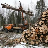 Бурков потребовал разобраться с махинациями на аукционах по аренде омского леса
