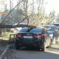 На Левобережье Омска дерево придавило припаркованное авто