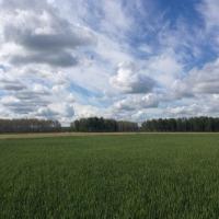 На развитие льноводства омские аграрии получат 13,8 миллиона рублей из федерального бюджета