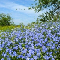 Омскому растениеводству выделено более 14 миллионов рублей