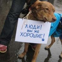 В КоАП внесут статью о жестоком обращении с животными