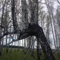 Трагедией закончилась заготовка дров в Омской области
