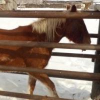 Двое омичей стреляли в лошадь ради ее мяса, но та сбежала к хозяину