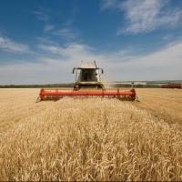 Шесть районов Омской области завершили уборку озимой пшеницы
