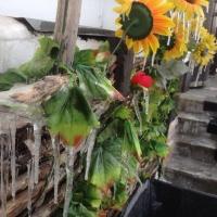 Выходные в Омске обещают быть зимними