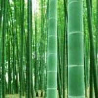 Бамбук в современной отделке: эксклюзивная натуральность