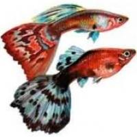 Преимущества внешнего фильтра для аквариума