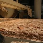 Немцы заинтересовались омской древесиной