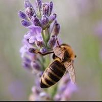 Биологи доказали, что яд бразильской осы может вылечить рак