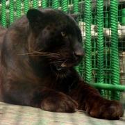 Большереченский зоопарк отпразднует 28-летие