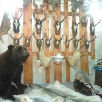 Омские охотники не торопятся разбирать разрешения на добычу медведя бурого