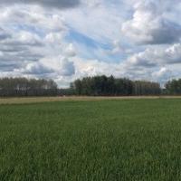 В Омской области появится Управление пищевой и перерабатывающей промышленности