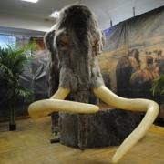 В омском Краеведческом музее оживут мамонты