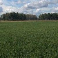 Китай заинтересован в поставках пивоваренного ячменя из Омской области