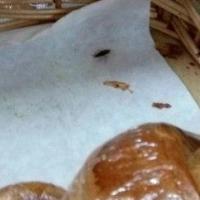 В омском магазине по булочкам бегают тараканы