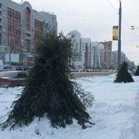 В Омске появились артхаусные елки