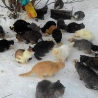 Жители Омской области обеспокоены грядущим отравлением кошек
