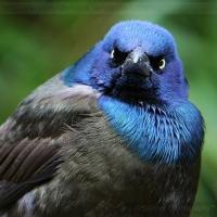 Научные исследования с квадрокоптерами страдают из-за нападений птиц