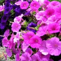 Глава Омска назвал свои любимые цветы