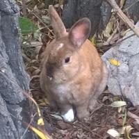 Омичи ловят декоративного кролика в парке «Зеленый остров»