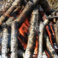 Омская прокуратура попросила у властей не пускать людей в леса