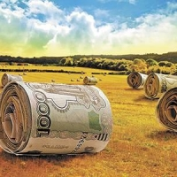 Омский фермер дважды обманул государство при помощи субсидий
