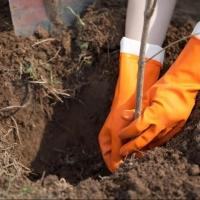 Осенью омичи высадили более трех тысяч деревьев и кустарников