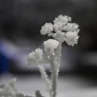 Начало новогодних каникул в Омской области будет морозным