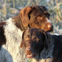 """Омский губернатор вывел своих охотничьих собак """"в свет"""""""
