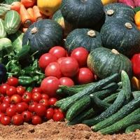 Турецкие огурцы, томаты и зелень на омском рынке успешно замещают местные товаропроизводители