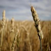 В Омске увеличились налоговые отчисления от сельхозтоваропроизводителей