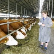 Правительство области поддержит производителей молока