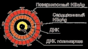 HBsAg: о результатах анализов на гепатит В