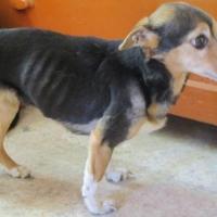 В Омске 5 истощенных собак оказались замурованными в квартире умершей хозяйки