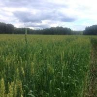 В 15 районах Омской области приступили к полевым работам